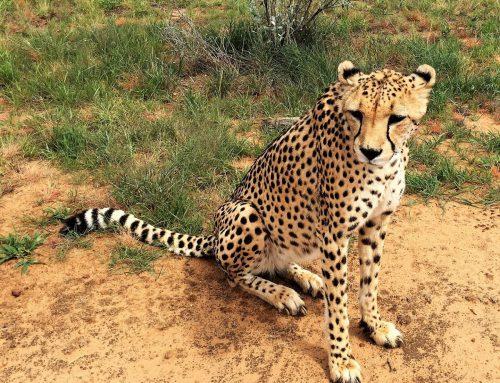 Tourismus-PR | Afrika bewusst erleben